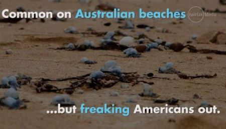 Just one of these has caused panic on the East Coast, but they're common in Australia.