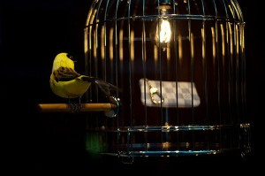 """Gilded Cage,"" courtesy of KayVee.INC through Creative Commons."