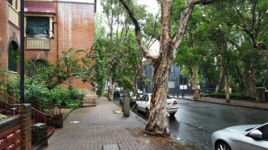 Typical street greenery in the Redfern area.