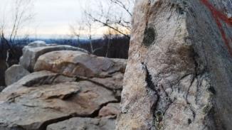 8_lichen