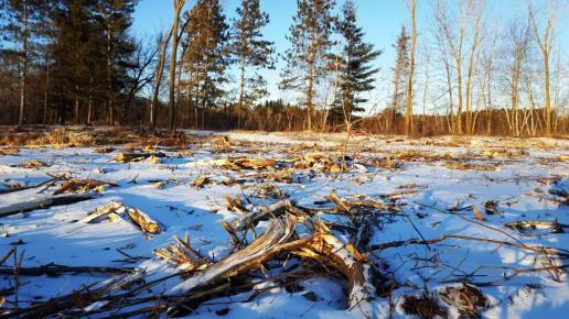 02_Late-afternoon shadows fall on an area of Schmeeckle that is undergoing reforestation