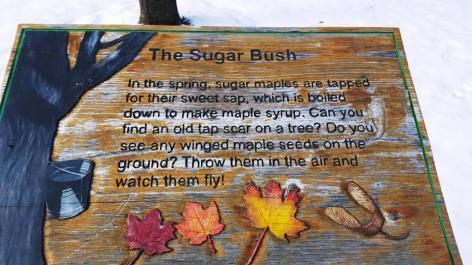 02_sugar bush