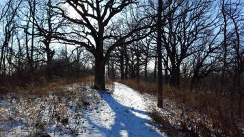 09_winter woods