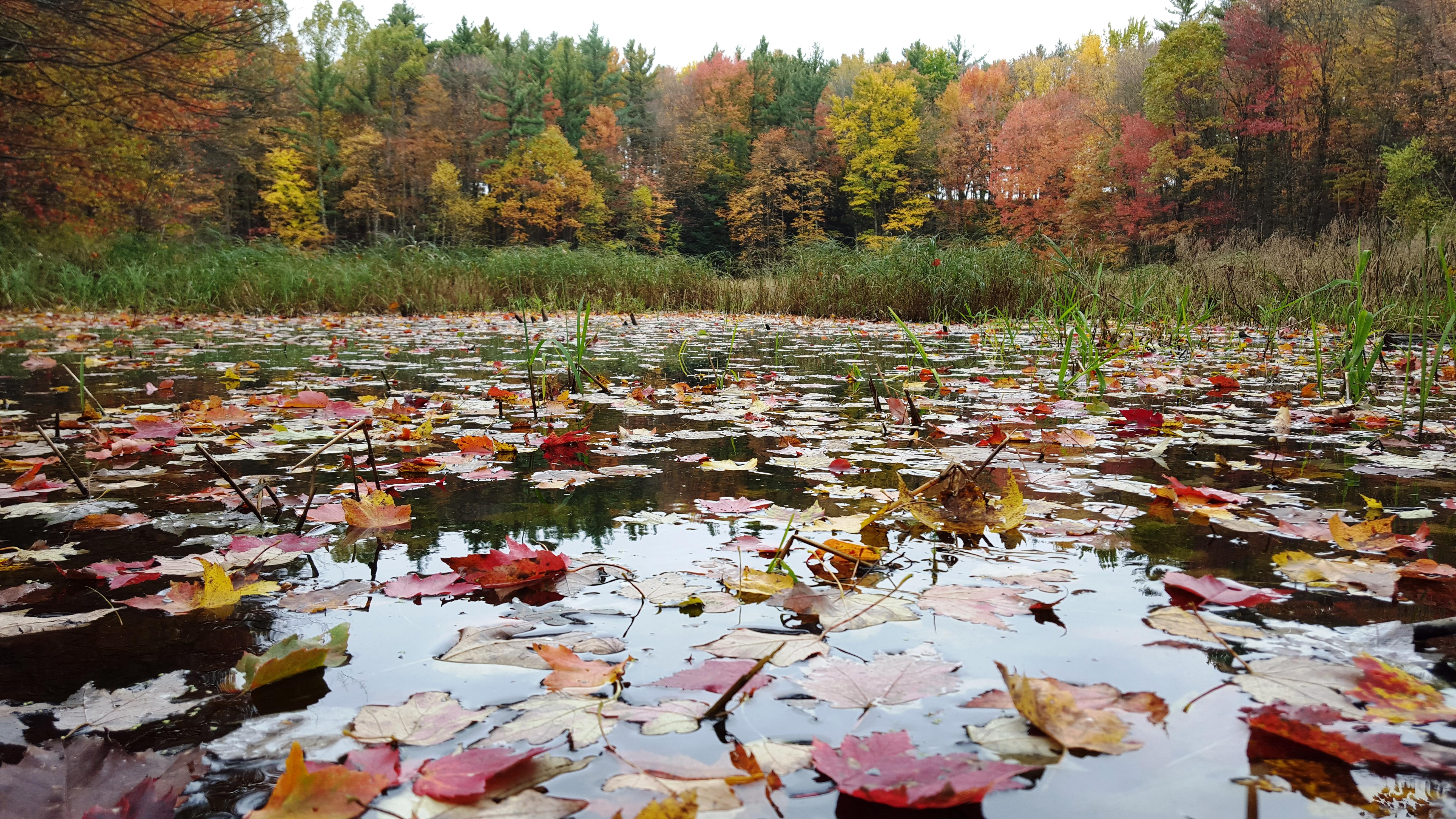 ellingson wetlands 2